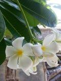 Λουλούδι λυπημένου Στοκ φωτογραφία με δικαίωμα ελεύθερης χρήσης