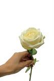 Λουλούδι υπό εξέταση Στοκ φωτογραφία με δικαίωμα ελεύθερης χρήσης