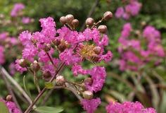Λουλούδι υφάσματος κρεπ Στοκ φωτογραφία με δικαίωμα ελεύθερης χρήσης