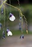 Λουλούδι υδρόβιων εγκαταστάσεων Στοκ εικόνες με δικαίωμα ελεύθερης χρήσης