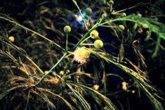 Λουλούδι φεγγαριών Στοκ φωτογραφίες με δικαίωμα ελεύθερης χρήσης
