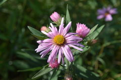Λουλούδι φθινοπώρου τομέων Στοκ φωτογραφία με δικαίωμα ελεύθερης χρήσης