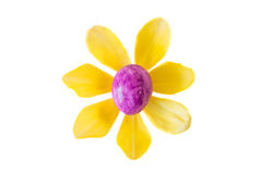Λουλούδι φιαγμένο από ιώδες αυγό Πάσχας και κίτρινο άνθος τουλιπών Στοκ φωτογραφία με δικαίωμα ελεύθερης χρήσης