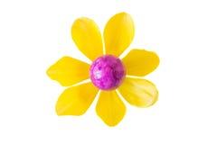 Λουλούδι φιαγμένο από ιώδες αυγό Πάσχας και κίτρινο άνθος τουλιπών Στοκ Εικόνες
