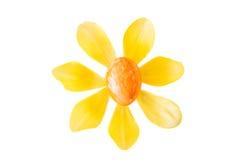 Λουλούδι φιαγμένο από πορτοκαλί αυγό Πάσχας και κίτρινο άνθος τουλιπών Στοκ εικόνα με δικαίωμα ελεύθερης χρήσης