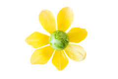 Λουλούδι φιαγμένο από πράσινο αυγό Πάσχας και κίτρινο άνθος τουλιπών Στοκ φωτογραφίες με δικαίωμα ελεύθερης χρήσης