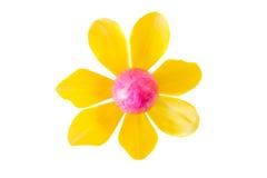 Λουλούδι φιαγμένο από ρόδινο αυγό Πάσχας και κίτρινο άνθος τουλιπών Στοκ Εικόνες