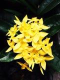 Λουλούδι φυσικό στη ζούγκλα Στοκ εικόνες με δικαίωμα ελεύθερης χρήσης