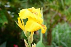 Λουλούδι φύσης Στοκ Εικόνα