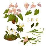 Λουλούδι φλαμίγκο Στοκ Εικόνες