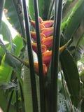 Λουλούδι φλυτζανιών τσαγιού στοκ εικόνες
