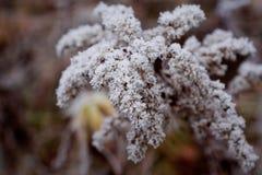 Λουλούδι χιονιού στοκ φωτογραφίες