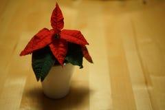 Λουλούδι Χριστουγέννων στην κινηματογράφηση σε πρώτο πλάνο Στοκ εικόνες με δικαίωμα ελεύθερης χρήσης