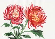 Λουλούδι χρυσάνθεμων διανυσματική απεικόνιση
