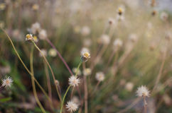 Λουλούδι χλόης Στοκ φωτογραφίες με δικαίωμα ελεύθερης χρήσης