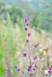 Λουλούδι χλόης Στοκ εικόνες με δικαίωμα ελεύθερης χρήσης