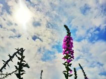 Λουλούδι όμορφο και ουρανός Στοκ φωτογραφία με δικαίωμα ελεύθερης χρήσης
