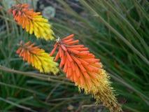 Λουλούδι 2 στοκ εικόνες με δικαίωμα ελεύθερης χρήσης
