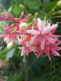 Λουλούδι στοκ εικόνες με δικαίωμα ελεύθερης χρήσης