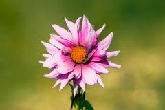 Λουλούδι! Στοκ εικόνες με δικαίωμα ελεύθερης χρήσης