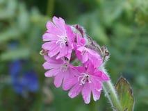 Λουλούδι; στοκ φωτογραφίες