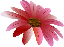 Λουλούδι 3 Στοκ εικόνα με δικαίωμα ελεύθερης χρήσης