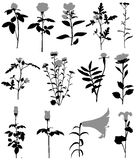 Λουλούδι Απεικόνιση αποθεμάτων