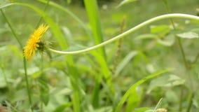 Λουλούδι φιλμ μικρού μήκους