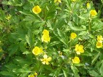 Λουλούδι 12 Στοκ εικόνες με δικαίωμα ελεύθερης χρήσης