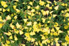 Λουλούδι Anatara Στοκ φωτογραφία με δικαίωμα ελεύθερης χρήσης