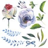 Λουλούδι anemone Wildflower σε ένα ύφος watercolor που απομονώνεται Στοκ Εικόνα
