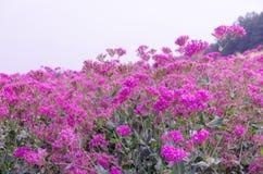 Λουλούδι armeria Silene Στοκ εικόνα με δικαίωμα ελεύθερης χρήσης
