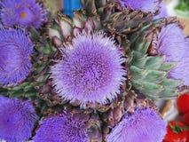 Λουλούδι Artichock Στοκ Εικόνες