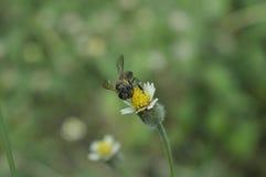 Λουλούδι backgrond2 Στοκ Εικόνες