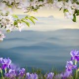 Λουλούδι background_108 Στοκ εικόνα με δικαίωμα ελεύθερης χρήσης