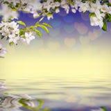 Λουλούδι background_132 Στοκ φωτογραφία με δικαίωμα ελεύθερης χρήσης