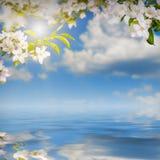 Λουλούδι background_143 Στοκ εικόνα με δικαίωμα ελεύθερης χρήσης