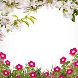 Λουλούδι background_77 Στοκ φωτογραφία με δικαίωμα ελεύθερης χρήσης