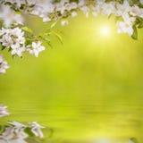 Λουλούδι background_136 Στοκ εικόνα με δικαίωμα ελεύθερης χρήσης