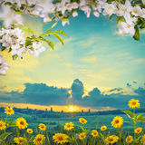 Λουλούδι background_105 Στοκ Φωτογραφίες