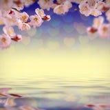 Λουλούδι background_129 Στοκ φωτογραφίες με δικαίωμα ελεύθερης χρήσης