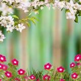 Λουλούδι background_83 Στοκ φωτογραφία με δικαίωμα ελεύθερης χρήσης