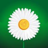 Λουλούδι Chamomile, camomile, ρόδα μαργαριτών, αλυσίδα μαργαριτών, chamomel Στοκ Εικόνες