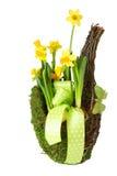 Λουλούδι Daffodil Στοκ εικόνες με δικαίωμα ελεύθερης χρήσης