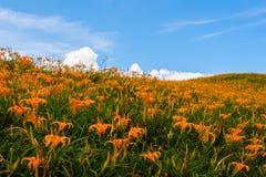 Λουλούδι Daylily στο πέτρινο βουνό εξήντα Στοκ φωτογραφία με δικαίωμα ελεύθερης χρήσης