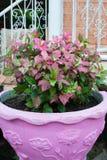 Λουλούδι flowerpot Στοκ Εικόνες