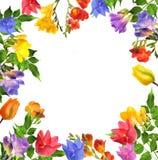 Λουλούδι Floxia Στοκ εικόνα με δικαίωμα ελεύθερης χρήσης
