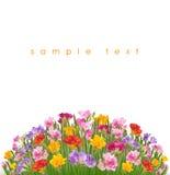 Λουλούδι Floxia Στοκ εικόνες με δικαίωμα ελεύθερης χρήσης