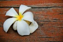 Λουλούδι, Frangipani, και πέτρα Plumeria Στοκ φωτογραφία με δικαίωμα ελεύθερης χρήσης