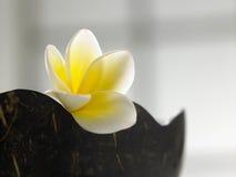 Λουλούδι Frangipani Στοκ εικόνες με δικαίωμα ελεύθερης χρήσης